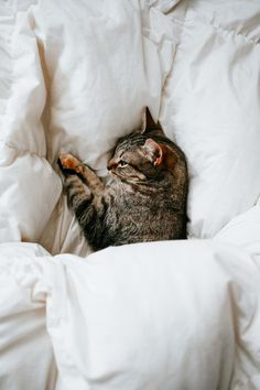 5 All-Natural Latex Mattresses That Are Better Than A Casper // The Good Trade // I Love Cats, Cute Cats, Funny Cats, Adorable Kittens, Crazy Cat Lady, Crazy Cats, Beautiful Cats, Animals Beautiful, Beautiful Pictures