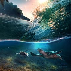 Tropical paradise with turtles