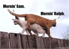 "I'm not really a ""cat person"" but I think this is pretty hilarious."