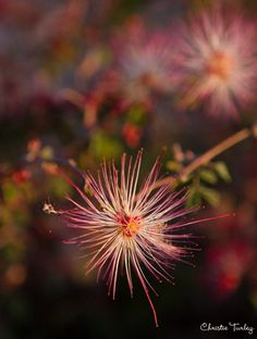 Flower Photography Tips and Ideas