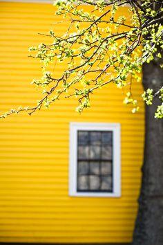 #happyskirtt.com # yellow