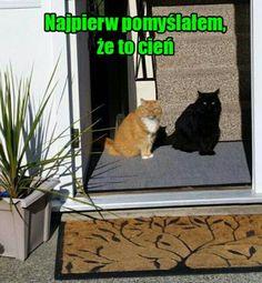 w humor - lel w humor - iksde… # Losowo # amreading # books # wattpad Cat Memes, Funny Memes, Polish Memes, Weekend Humor, Best Memes Ever, Aesthetic Memes, Wtf Funny, Good Mood, Fnaf