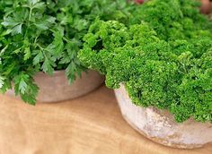 breath and eat your parsley