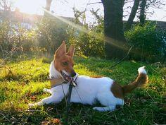 Name: Hugo, Breed: Dog