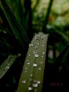 kropelki deszczu.