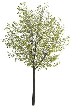 Cutout tree 24 from Tree Collection vol. 3 PNG Cutout texture of tree from Tree Collection vol. Vegetable Garden Tips, Planting Vegetables, Trees And Shrubs, Trees To Plant, Spring Tree, Spring Summer, Coupes Architecture, Architecture Presentation Board, Interior Design Sketches