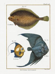 Bonnaterre Fish Prints 1788
