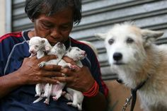 September Animals: A Homeless Man And His Pets