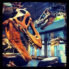 by @vertoiseau-#nhm100 Dinosaur Growth Series