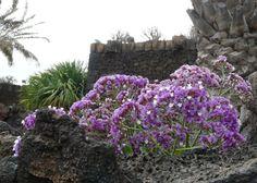 Lanzarote, Wyspy Kanaryjskie, Hiszpania Cabbage, Vegetables, Plants, Lanzarote, Cabbages, Vegetable Recipes, Plant, Brussels Sprouts, Veggies