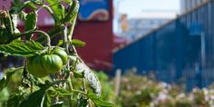 San Francisco will have CA's first Urban Ag Incentive Zone.