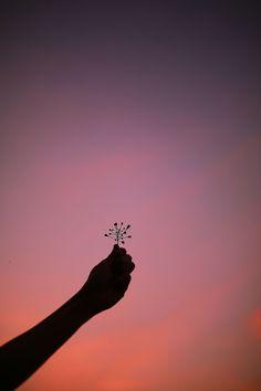 dandelion .