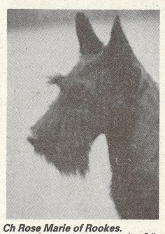 1933 Crufts RBIS Ch Rose Marie of Rooks.