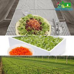 Dal campo alla tavola in appena 24 ore... Stasera Vi proponiamo un insalatina verde con carote julienne, semi di chia, semi di lino e olive taggiasche.   Mangia sano, vivi meglio!   #LaMarostegana #insalatina #carote #semi #serre