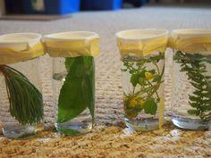 Nature Sensory Bottles Sensory Bags, Sensory Bottles, Baby Sensory, Sensory Activities, Sensory Play, Infant Activities, Montessori Science, Preschool Science, Science Ideas