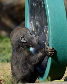 Mirror, mirror on the wall, who's the cutest of them all? (photo: Deric Wagner)
