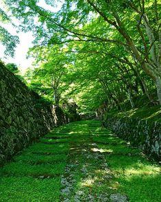 Hyakusai-ji TempleJapan, Higashiomi, Shiga, Japan, Travel, Tourist Attraction, Sightseeing Spots, Superb Views, Green, Summer, 百済寺, 滋賀, 東近江, 青紅葉, 日本, 絶景, 湖東三山
