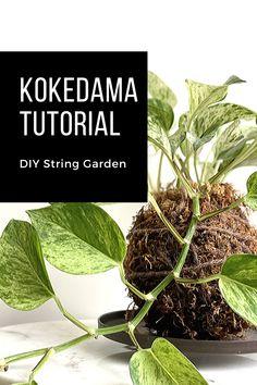 10 easy steps to make your kokedama moss ball. Bonsai Soil, String Garden, Indian Arts And Crafts, Missouri Botanical Garden, Garden Art, Dish Garden, Indoor Plants, Indoor Garden, Home Decor Pictures