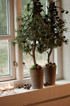 DIY: How to Make Evergreen Topiaries - tutorial shows how to make these topiaries using evergreen branches, greenery and pots. If you use craft store greenery, you could use them from year to year - via Inspire Me Today