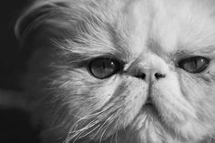 Cat photography, for most people, is a way to remember their pets' funny actions and playing around. But actually, cat pictures require more talent to move to t(...)