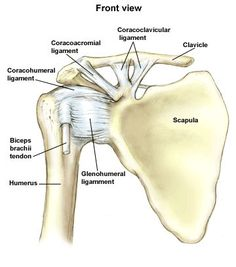 coracoacromial ligament, coracohumeral ligament, glenohumeral ligament