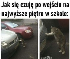 Polish Memes, Wtf Funny, Animal Memes, Haha, Jokes, Humor, Cool Stuff, Cute, Maine