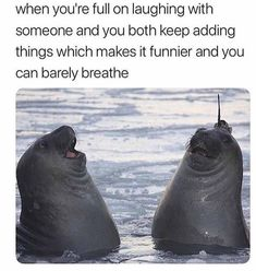 Latest viral funny animal pictures memes of the day. Check these top 52 latest funny animal pictures you should see Funny Animal Pictures, Funny Animals, Adorable Animals, Best Memes, Funny Memes, Funny Quotes, True Memes, Cartoon Memes, Dog Memes