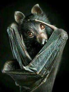 Pipistrello...