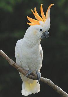 Птицы. Мадагаскар Сочи. madagaskar-sochi.com