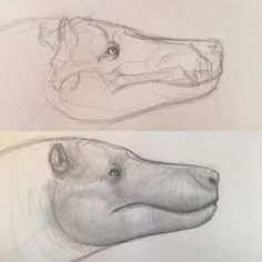 Doodling Andrewsarchus before lunch. Quite intrigued by another paleoartist's hippopotamus-like reconstruction of this carnivorous hoofed mammal, so I decided to try it out before I do a full body sketch of it.   #andrewsarchus #andrewsarchusmongoliensis #mammal #paleoart #paleontology #art #doodle #sketch #drawing #animals #animalart #wildlifeart #wildlife #anatomy #skull #animalskull