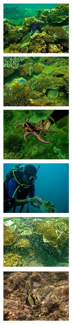 Diving in Sri Lanka