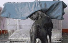 27 Animals That Are Probably Smarter Than You