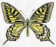 Resultado de imagen de mariposas para dibujar a lapiz
