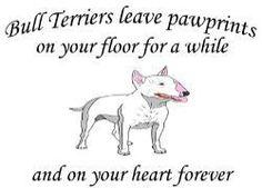 #BullTerrier