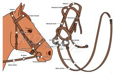 Récapitulatif des différentes parties du bridon du cheval Horse Facts, Horse Care, Show Horses, Horse Riding, Drawing Reference, Equestrian, Homestead Living, Aide, Horses