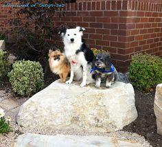 Gorgeous #BlogPaws dogs #BlogPawsQuotes