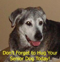 93 Best Old Dogs Rule images in 2013 | Old dogs, Pet