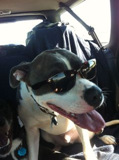 This is Archer sporting his shades on the trip down to sunny Florida! He kept them on for three hours.