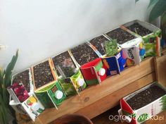 Great idea to start plants in or grow inside edible plants from!