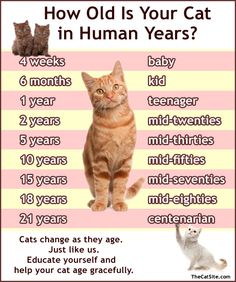 "There is no ""cat year = X human  years"" formula, but here's a rough estimate."