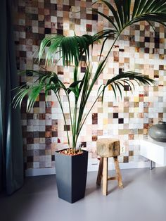 #gietvloer #grijs #behang #plant #pietheineek  Combination industrial living room, grey floor and piet hein eek wallpaper