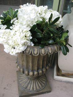 Urn, hydrangeas and pittosporum.