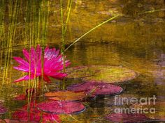 Lily Pond by Marcia Lee Jones. Lilies Flowers, Paper Flowers, Buy Prints, Framed Prints, Lily Pond, My Favorite Image, Artist At Work, Art For Sale, Home Art