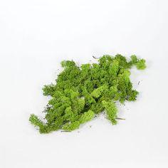 Συσκευασία 50gr Διακοσμητικά φυσικά βρύα - moss. | eshop-dcse Autumn Park, Herbs, Herb, Medicinal Plants