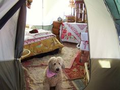 wow. this chica is serious about camping. she totally decked out her tent with glamping aplomb.