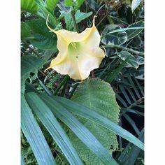 botanic belfast