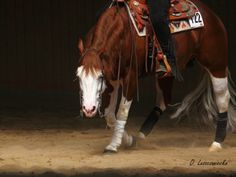 love this. I love reining.