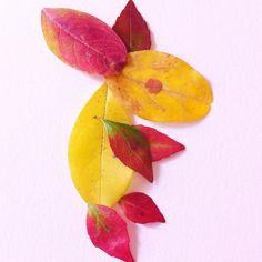 Un petit lapin qui passait dans mon jardin  A little rabbit I met un my garden  #flowleaf2015 #leaves #autumnleaves #fallcolors #feuilles #feuillesdautomne #couleursdautomne #fall #autumn #automne #fallinspiration #rabbit #lapin