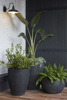 The Block 2019 Oslo: Verandah reveals Balcony Plants, Patio Plants, Balcony Garden, Potted Plants, Garden Pots, Indoor Plants, Outdoor Pots, Outdoor Gardens, Front Garden Landscape