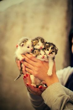 boquet of kittens